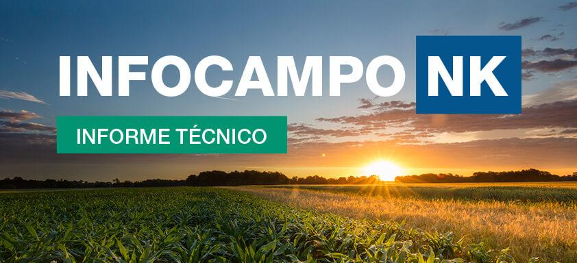 InfoCampo NK