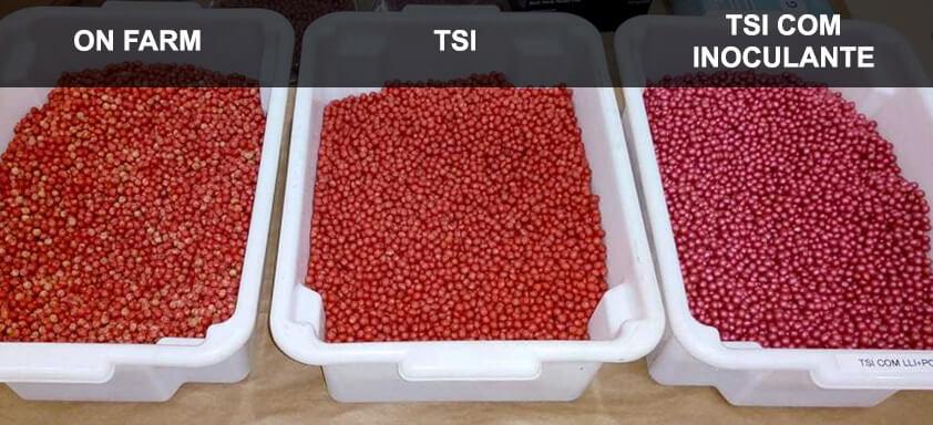 Entenda por que o tratamento de sementes industrial é a escolha mais vantajosa