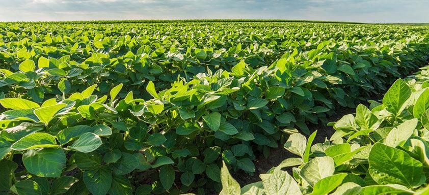 Existe um horário ideal para pulverizar fungicidas em soja?