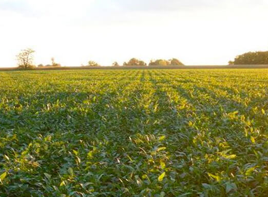 Manejo consciente: eficácia no combate às doenças da soja