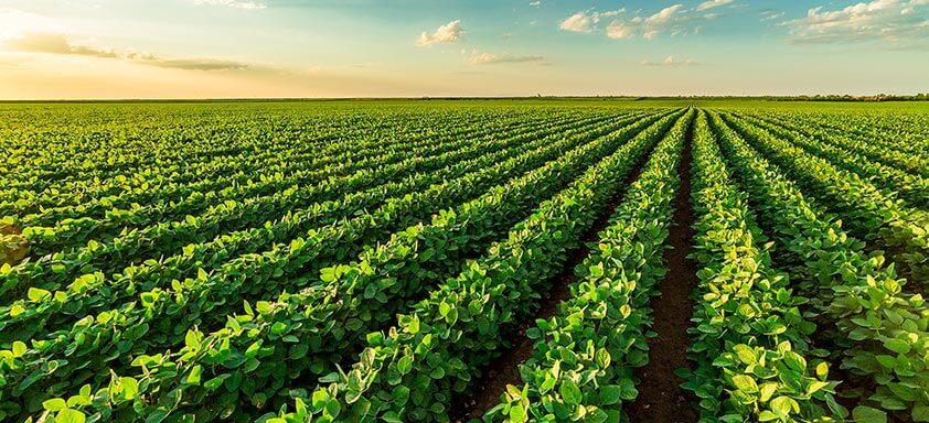 A importância da prevenção inicial contra o complexo de doenças na soja