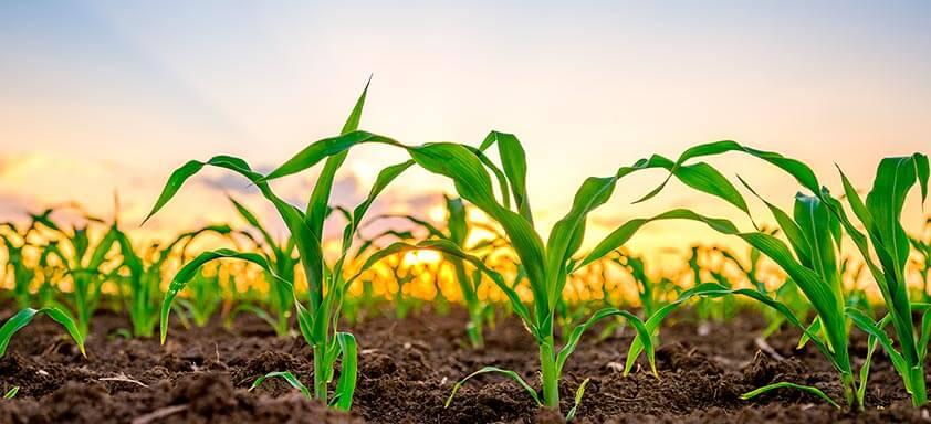 A produtividade começa com o tratamento de sementes