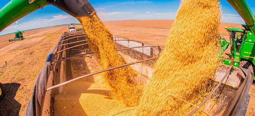 Agriculture Value Chain: soja e milho serão exportados diretamente para a China