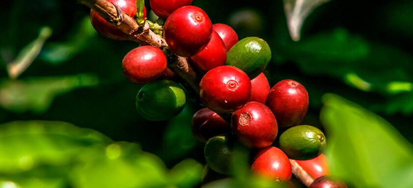 Café: como ter o vigor que a sua produtividade precisa?