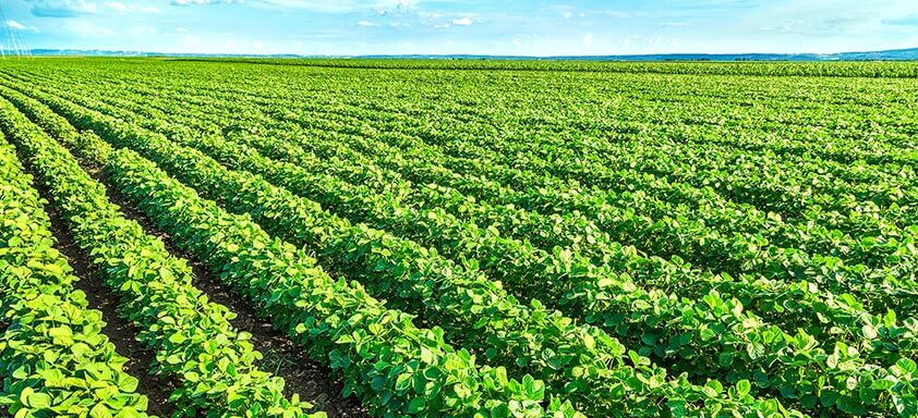 Conheça Alade: mais consistência no manejo de doenças da soja