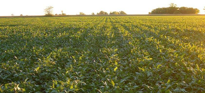 Fungicida multissítio: proteção superior contra doenças da soja