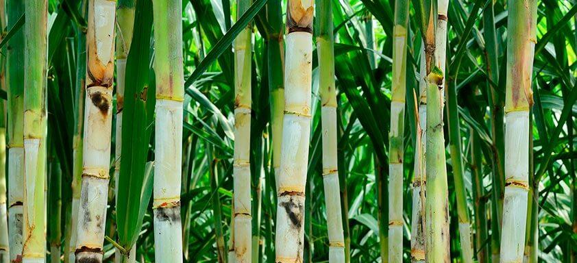 Herbicidas no manejo de daninhas: como escolher o ideal?