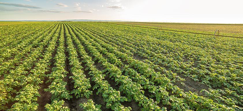 Hortifrúti: 9 pragas que podem acabar com sua produtividade