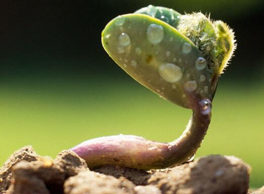 Nematoides: um perigo oculto nas lavouras