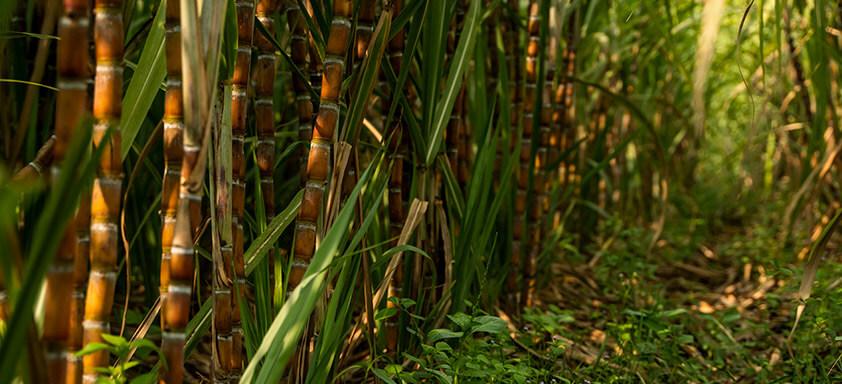 Como escolher um herbicida efetivo em períodos chuvosos?