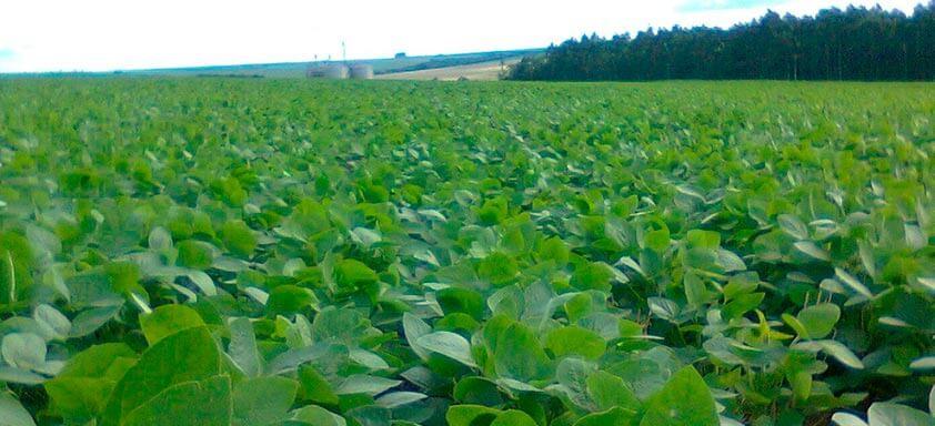 Por que usar um fungicida multipotente na lavoura de soja?