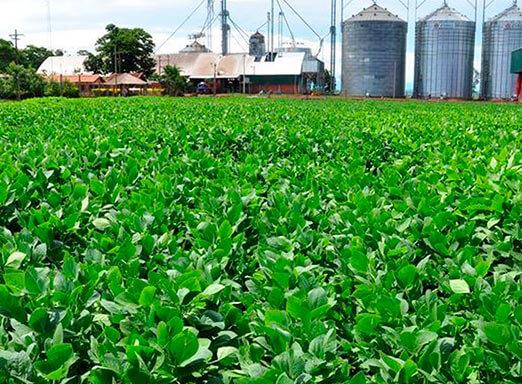 Potência e consistência: conheça a nova era de fungicidas