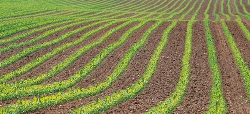 Tratamento de sementes: diga adeus às pragas do milho
