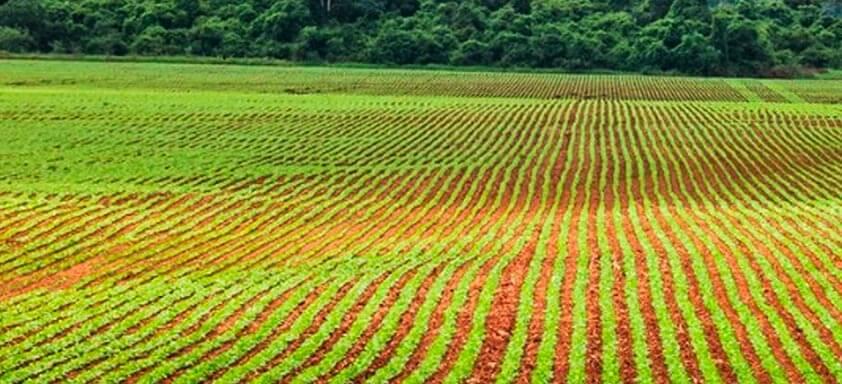 Tratamento de sementes fungicida para soja mais robusta