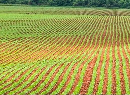 Tratamento de sementes: largue na frente em sua lavoura