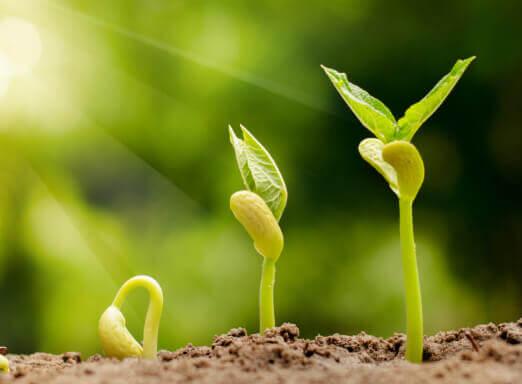 Qual a importância de usar sementes certificadas e defensivos genuínos?