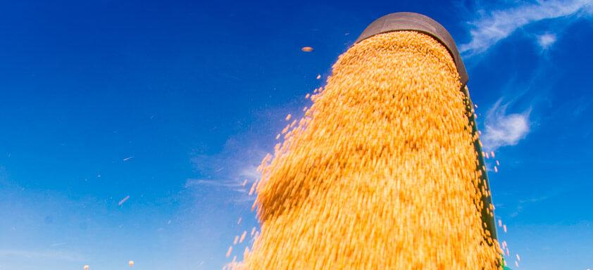 Boa safra de soja depende do controle de lagartas no pré-plantio