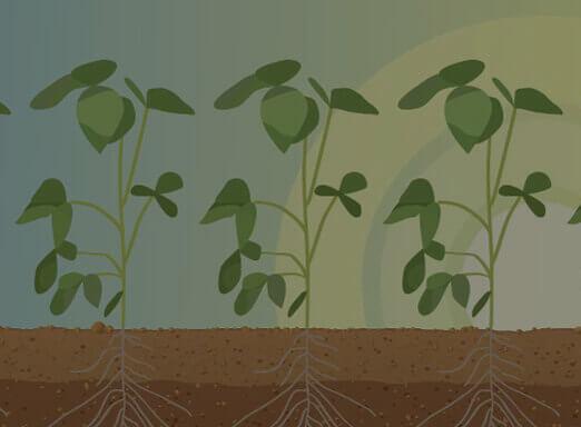 Como proteger sua lavoura das pragas iniciais?