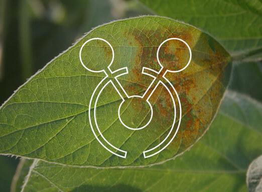 Potencialize o controle de doenças da soja com Cypress