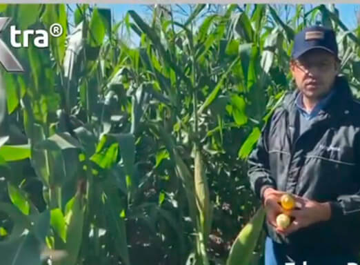 Melhor sanidade na lavoura de milho! Assista e confira