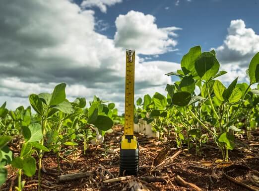 Tratamento de semente com diamidas protege melhor a soja