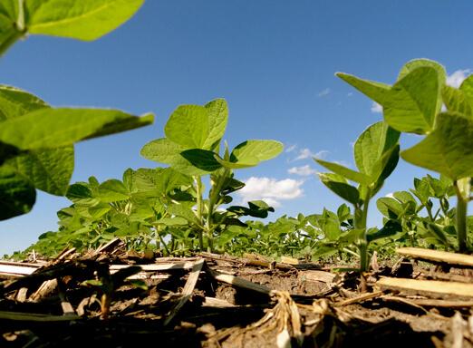 Tratamento de sementes de soja