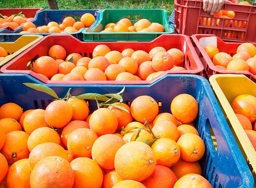 Caixas com laranjas
