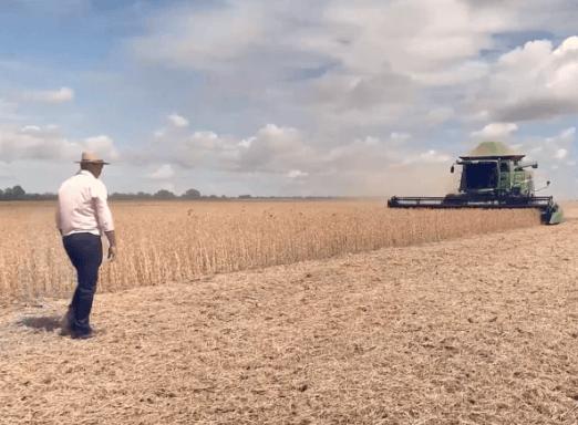 Colheitadeira e trabalhador rural em lavoura de soja