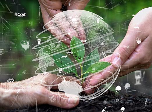 Mãos semeando muda de planta no solo