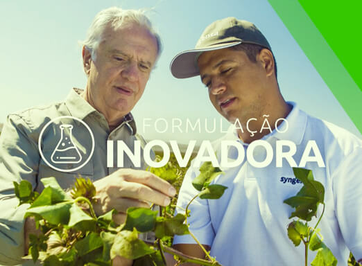 Dois homens analisando planta de algodão