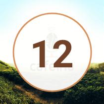EP12 Podcast Cafeína