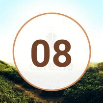 EP8 Podcast Cafeína