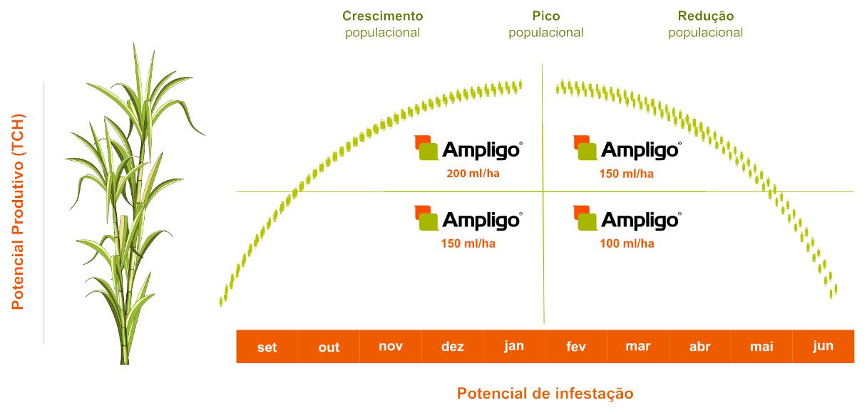 Ampligo: melhor escolha para o controle de pragas em todos os níveis de infestação.