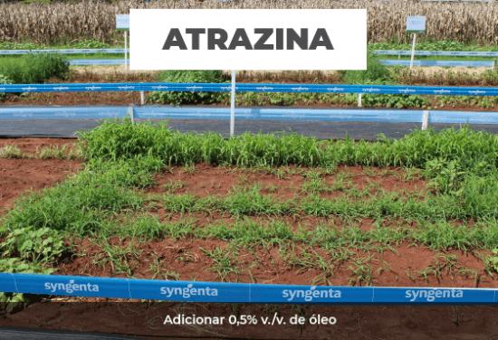Teste mostra superioridade de Calaris em relação a atrazina