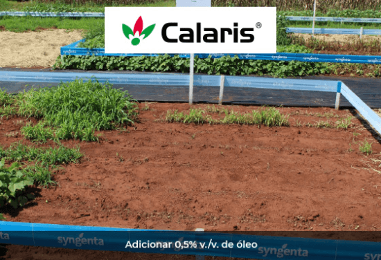 Teste comprova eficácia de Calaris no controle de daninhas