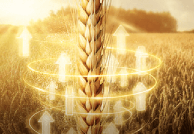 Moddus é regulador de crescimento para trigo