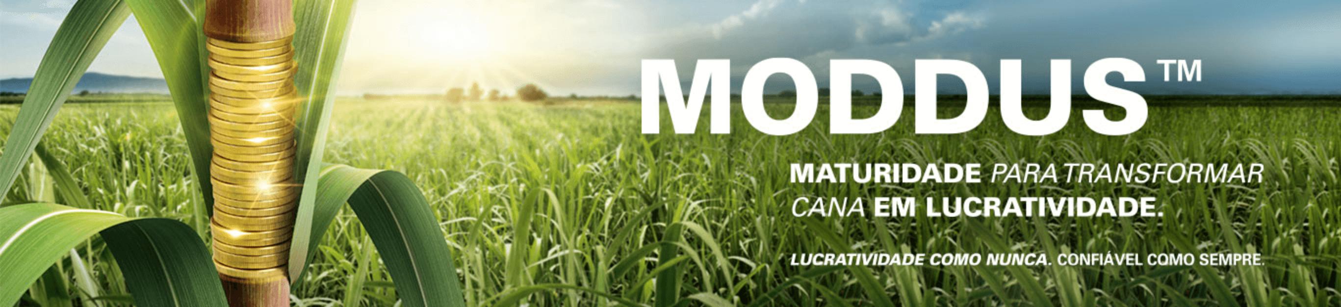 Moddus é regulador de crescimento para cana-de-açúcar