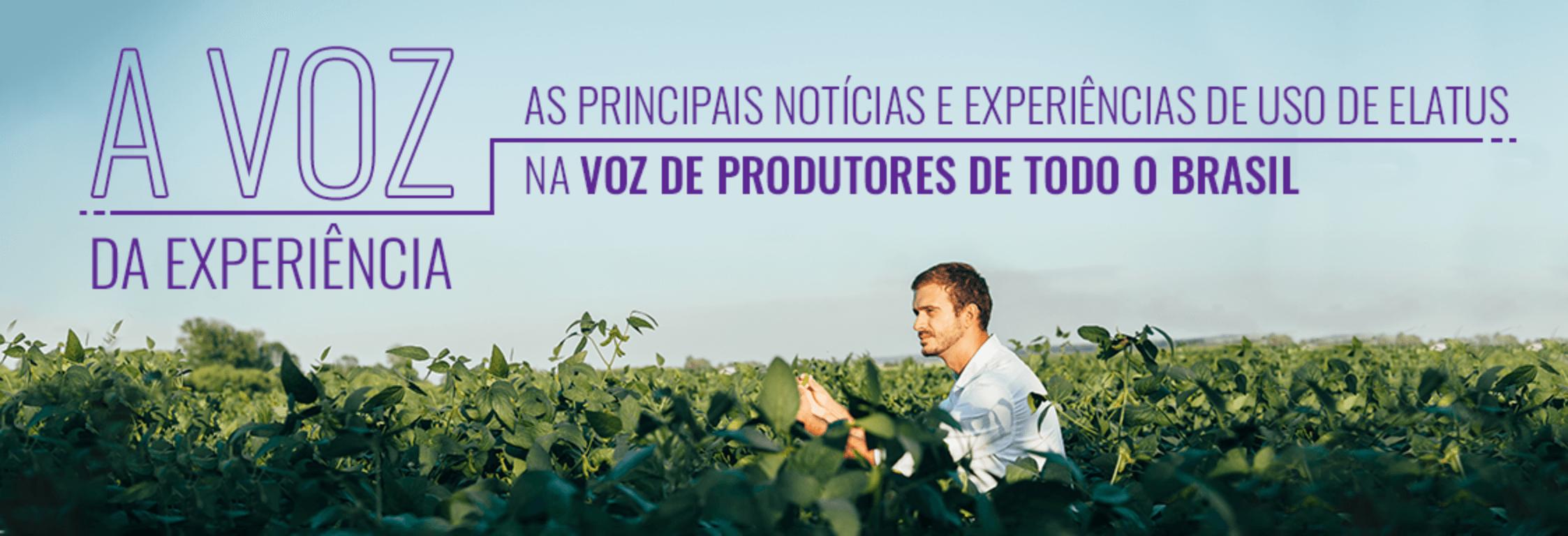 Notícias e experiências de uso de Elatus por produtores