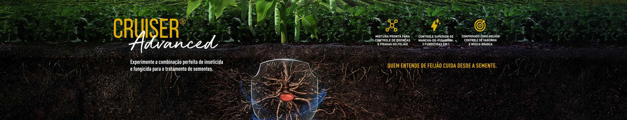 Inseticida e fungicida Cruiser Advanced para tratamento de sementes de feijão