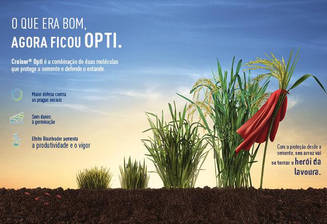 Inseticida Cruiser Opti protege a cultura de arroz desde a semente