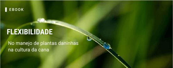 Flexibilidade no manejo de plantas daninhas na cultura da cana