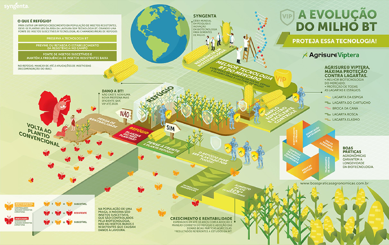 A evolução do milho BT