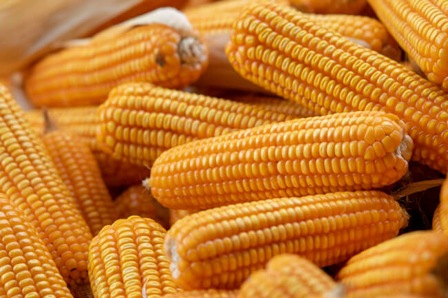 dia internacional do milho