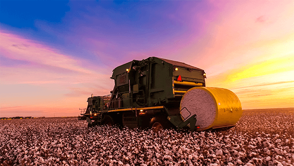colheitadeira de algodão na lavoura