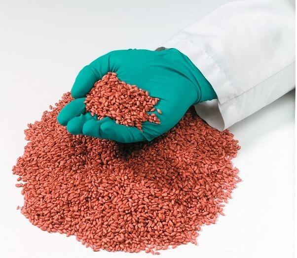 Sementes de trigo tratadas