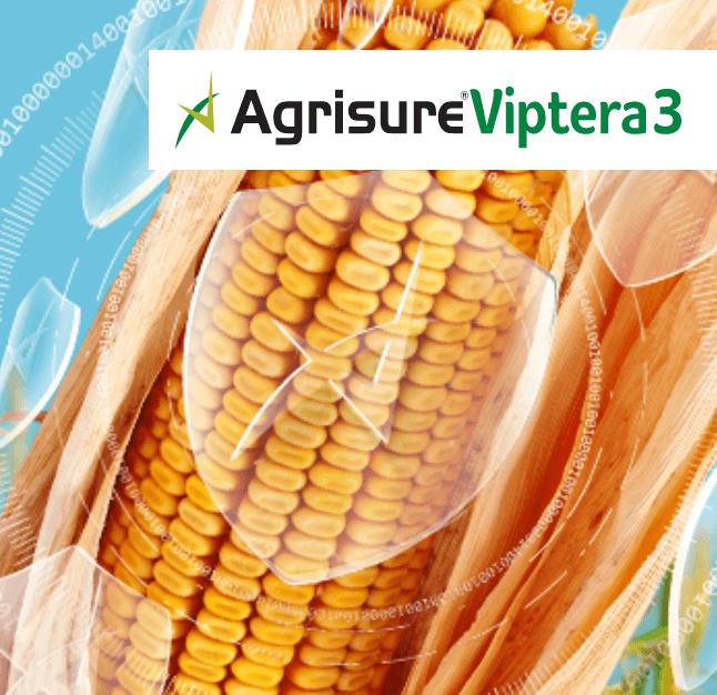 A maior inovação da última década para                 proteção do milho contra                 pragas e …