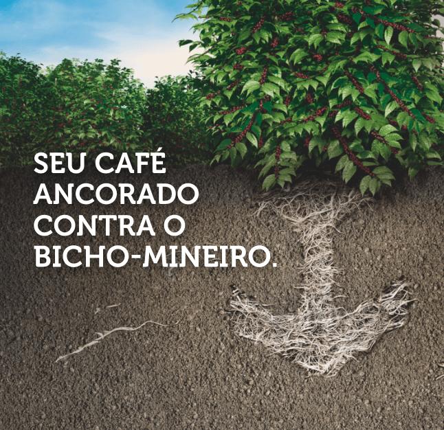 Seu café ancorado contra o bicho-mineiro.