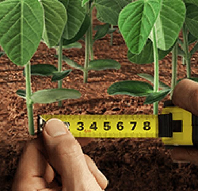 Fortenza Duo: O mais poderoso tratamento de sementes inseticidas.