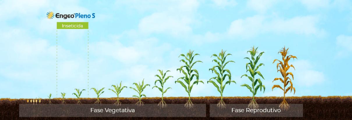 Posicionamento de Engeo Pleno S na cultura do milho