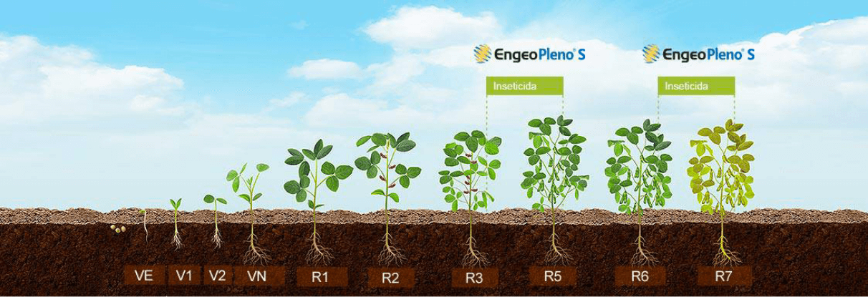 Posicionamento de Engeo Pleno S na cultura de soja